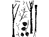 Click here for larger picture - Cling Stamp Set - Tall Birch (CDCCSTTAL-01) £8.99